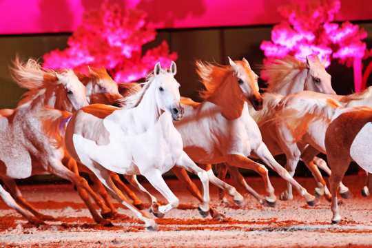 The Silver Herd from the Marbach Main and County Stud at Horse & Symphony.