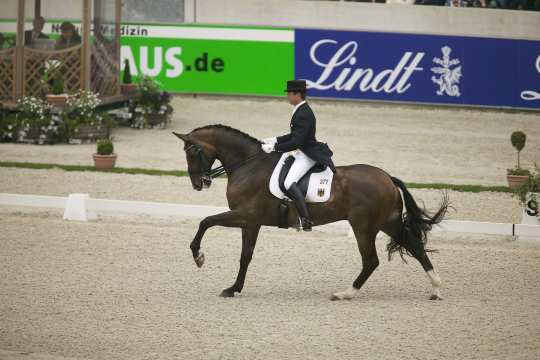 Meggle's Weltall VA enjoyed his twilight years at the Meggle Stables with all the freedom this exceptional horse deserved. The gelding, who became team Olympic champion with Martin Schaudt in Athens in 2004, died in 2018 at the age of 24.